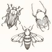 Hand drawn engraving Sketch of Scarab Beetle, May bug and Bee. D — Stock Vector
