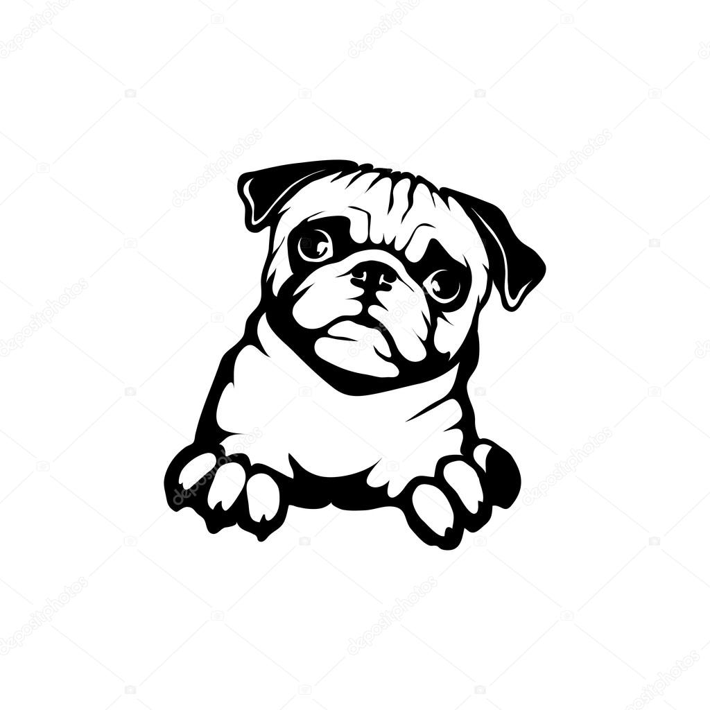 Stock Illustration Pug Dog Logo on dog drawings