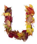Fall alphabet — Stock Photo