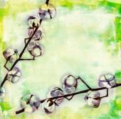 Watercolour cotton flowers — Stock fotografie