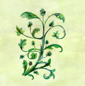 A watercolour vine decoration — Foto de Stock