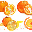 A set of bright watercolour oranges and a design element on a white background — Stock Photo #68156209