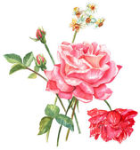 A vintage style watercolour drawing of a bouquet of roses and other flowers on a white background — Stock Photo