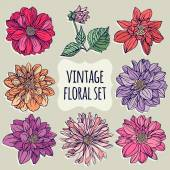 Vintage floral set. Dahlias. — Stock Vector