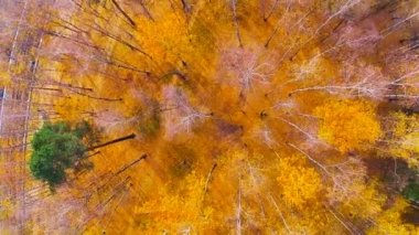 Golden Autumn - aerial video, whirling above an autumnal forest — Stock Video
