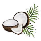 Coconut composition — Stock Vector