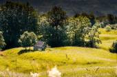 Wooden cottage in the mountain in summer — Foto Stock