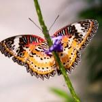 Butterfly on a stem — Stock Photo #62568677