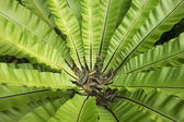 Tropical ferns — Stock Photo