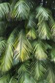 Tropical Palm Fronds — Stock Photo