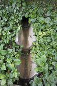 Small monsoon drain — Stock Photo