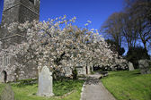 Spring Blossom in a Churchyard — Stock Photo