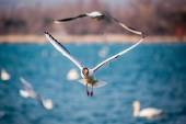Swans and other waterfowls on the Sea — Stock Photo
