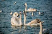 Birds of the sea — Stock Photo