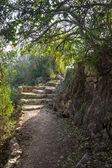Extraordinary path — Stock Photo