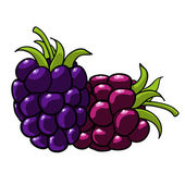 Blackberry hand drawn fruits isolated vector — Stock Vector