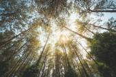 Forest From Below — Stock Photo