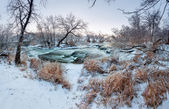Zimowy Las. Rzeka Krinka (Ukraina) — Zdjęcie stockowe