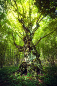 Magic tree — Stock Photo