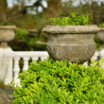 Green decorative Park bush — Stock Photo #63605689