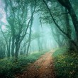 Road through a mysterious dark forest in fog with green leaves a — Stock Photo #68324407