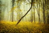 Mysterious forest in fog with orange leaves and yellow flowers — Stock Photo