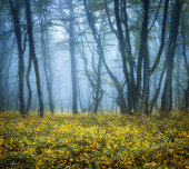 Mysterious dark forest in fog with green leaves and yellow flowe — Fotografia Stock