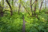 Pôr do sol na floresta mágica. Trilha. Paisagem de primavera — Fotografia Stock