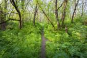 Krásný západ slunce do magického lesa. Stezka. Jarní krajina — Stock fotografie