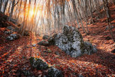 Beautiful autumn forest with stones in crimean mountains at suns — Stock Photo