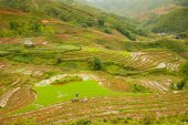 Rice paddies in the mountains, Northern Vietnam. — 图库照片