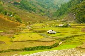 Rice paddies in the mountains, Vietnam — Stock Photo