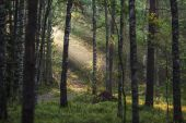 Light in the forest — Stock Photo