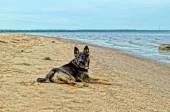 The dog on the coast — Stock Photo