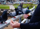 Feeding the pigeons in the park — Stock Photo
