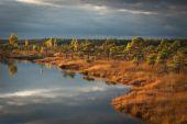 Swamp view — Stock Photo
