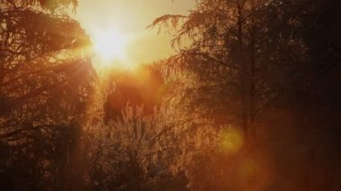 Sun shinning through the branches of frozen trees. Beautiful winter background. — Stock Video