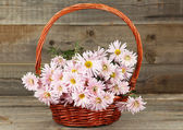 Lilac chrysanthemums in basket — Stock Photo