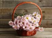 Lilac chrysanthemums in basket — Stock Photo