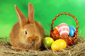 Young red rabbit in hay with eggs — Stock Photo