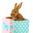 Young red rabbit in gift box — Stock Photo #71175695
