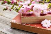Spring flowering branch with old books — Stock Photo