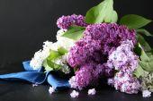 Beautiful purple and white  lilac — Stock Photo
