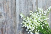 Blooming Lily of the Valley flowers — Stock Photo