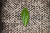 Green leaf on hand work bamboo texture — Stock Photo