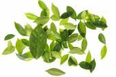 Dark and light Green leaf — Stock Photo