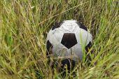 Pelota de futbol en la hierba y flor — Foto de Stock
