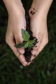 Рассада растений в руке ребенка — Стоковое фото