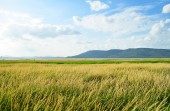 Beautiful rural land — Stock Photo