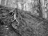 在森林中的树木根系 — 图库照片